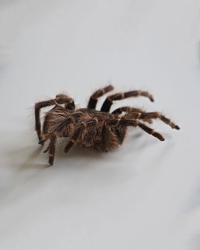 Peur des araignées, peur des chiens, peur des chats, peur de l'avion, peur du dentiste, peur des monstres